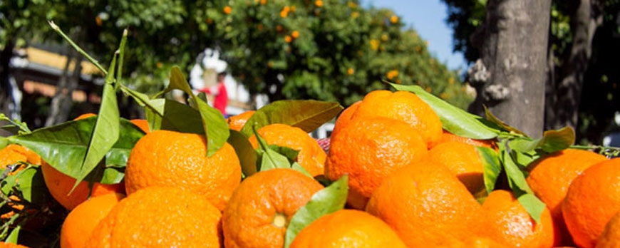 Aprovechando las naranjas: llega la 'tapa naranja'